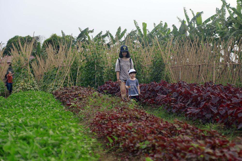khu vực vườn rau sạch