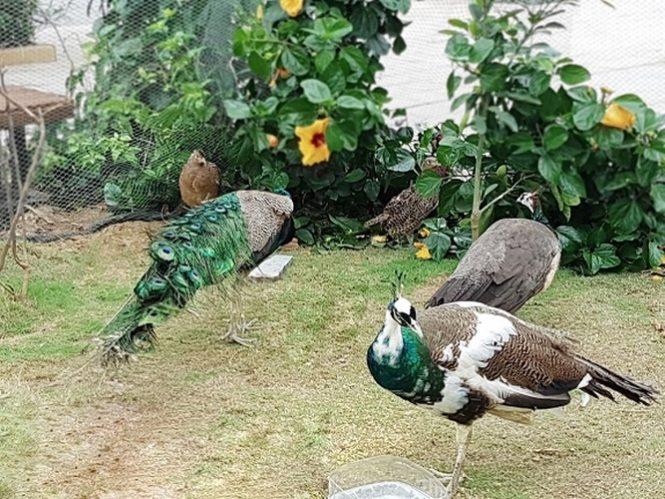 vườn chim nhiệt đới flc sầm sơn
