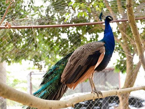 vườn chim flc sầm sơn